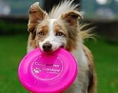 kira-frisbee